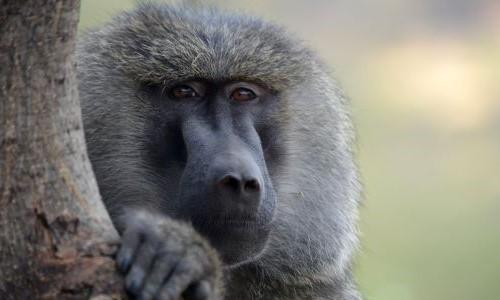 Deutsches Primatenzentrum: Führung