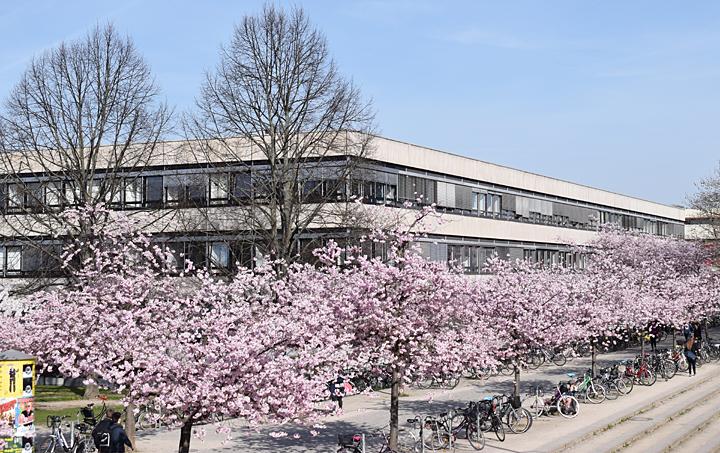 Kirschblüte Campus Oec Aufsicht EINS 720px