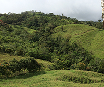 Waldlandschaft_Costa_Rica_206