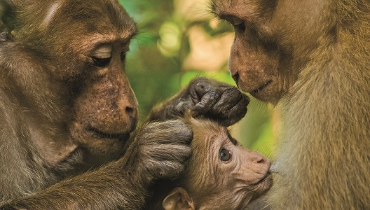 Deutsches Primatenzentrum - Lehrerfortbildung am 06. und 07.11.2019