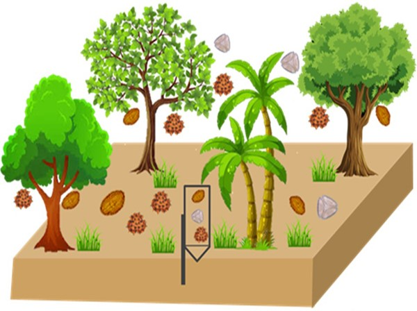 Plant phenology